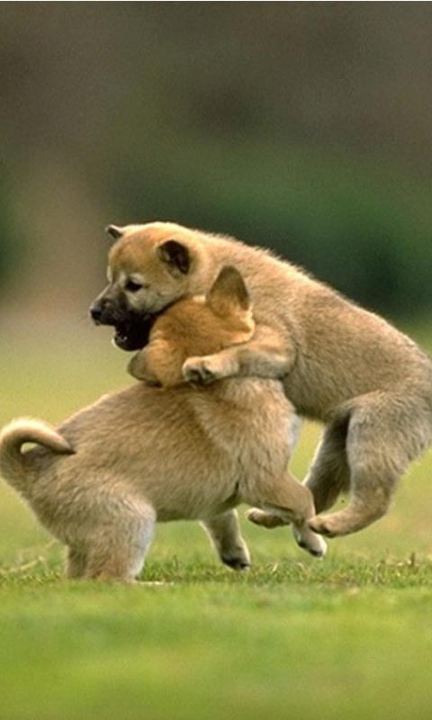 Cute Baby Animals Wallpapers - Android Apps on Google Play