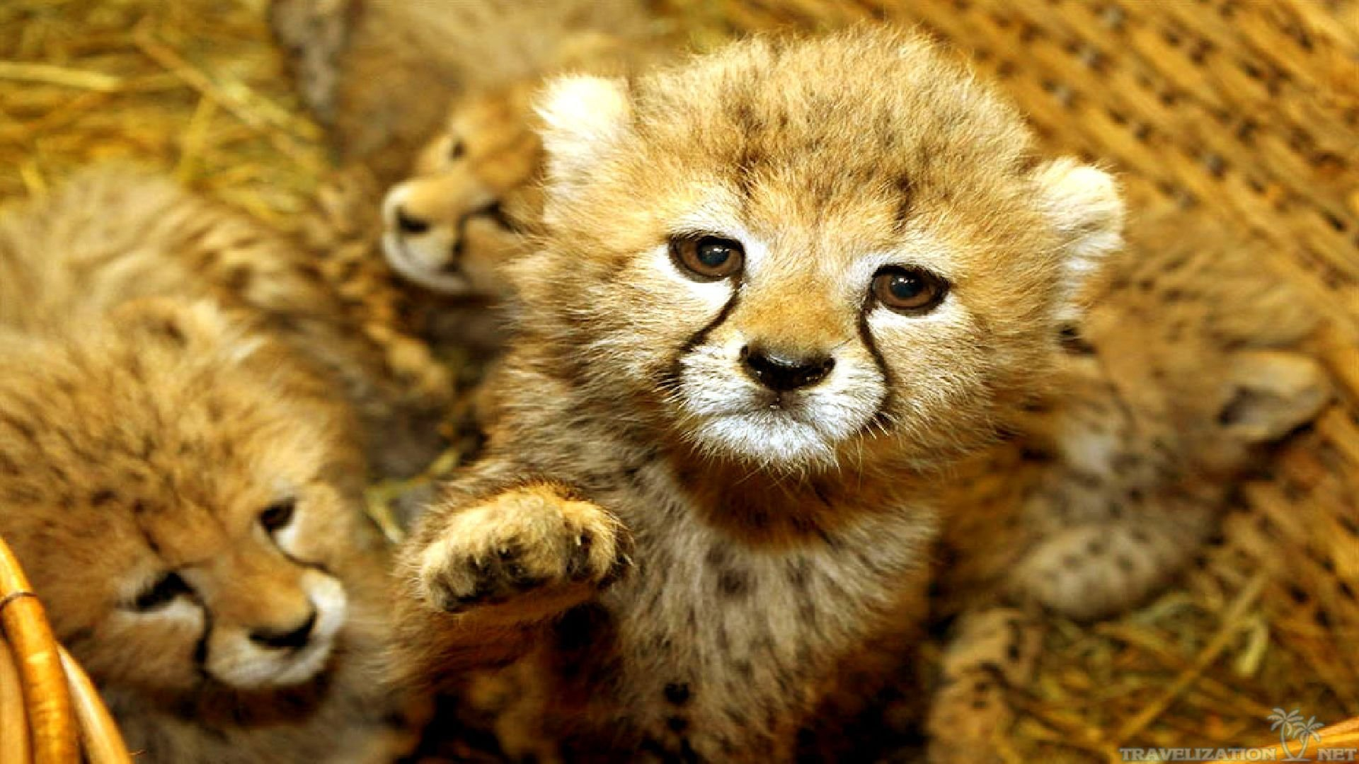 Cute Baby Animal Wallpaper