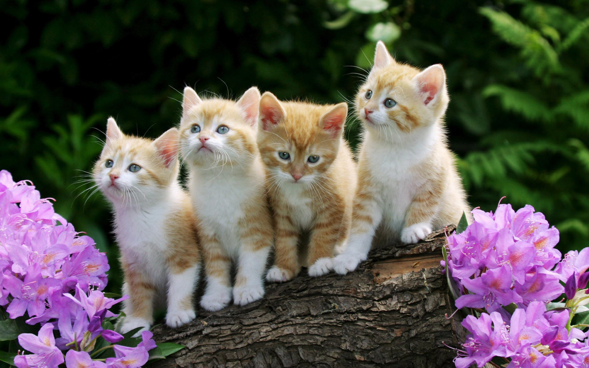 Cute Baby Cats Wallpapers Group (76+)