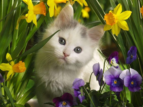 Baby Kittens for Free | Animals Cute Baby Cats Wallpaper Free