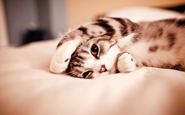 40 Cute Kittens Wallpapers