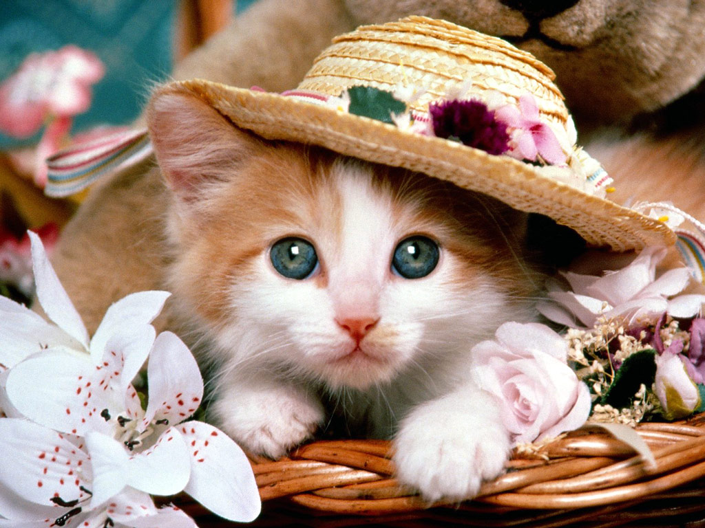Collection of Cute Baby Cats Wallpaper on HDWallpapers