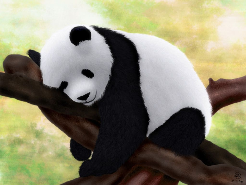 Baby Panda Wallpapers - Wallpaper Cave