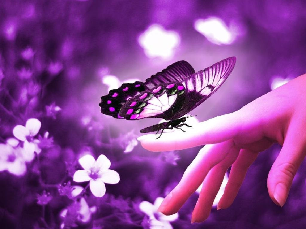 Cute Butterfly Wallpaper Sf Wallpaper
