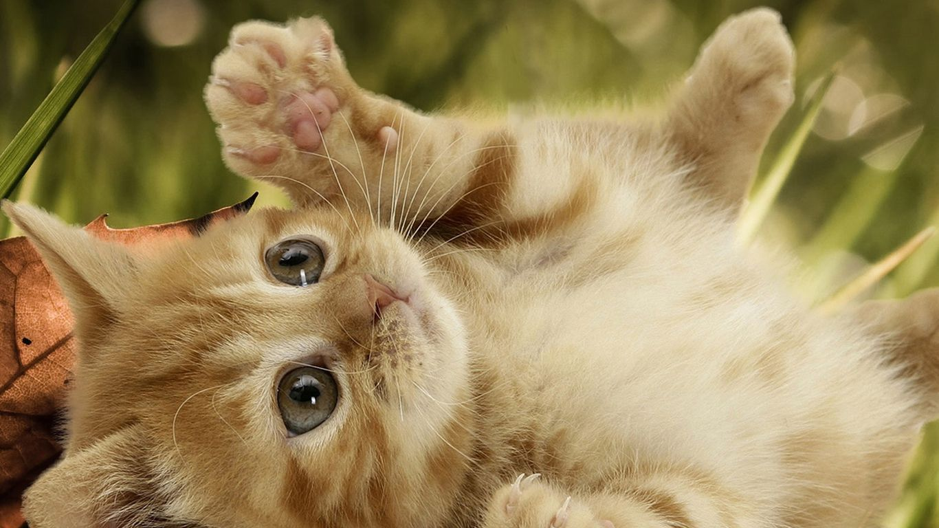 Cute Cat Backgrounds Sf Wallpaper
