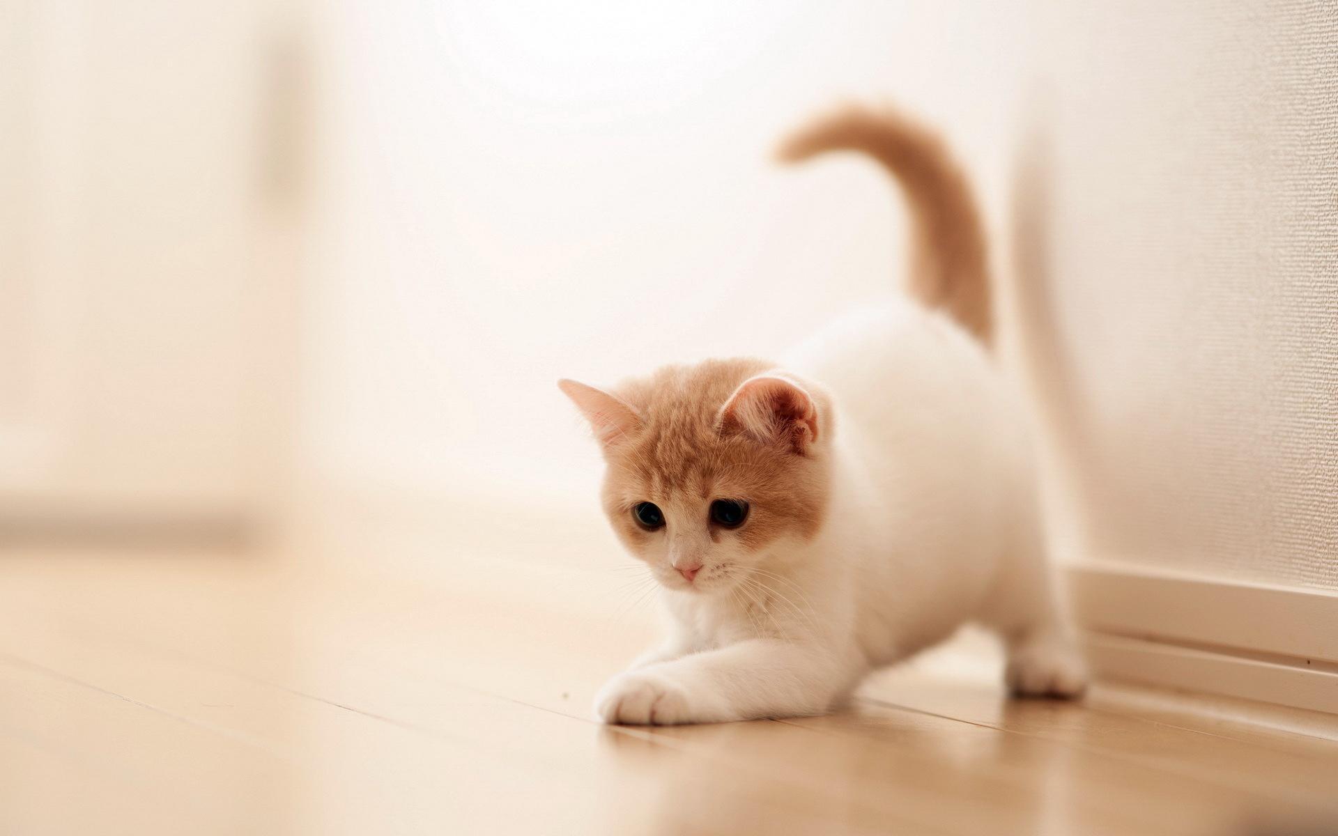Cute Cat Backgrounds - WallpaperSafari
