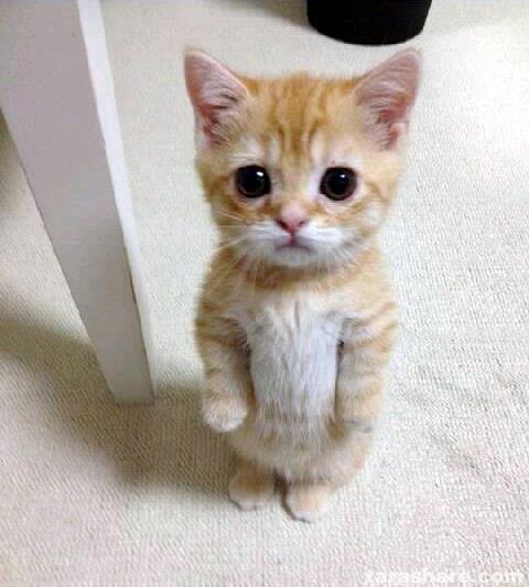 Cute Cat Meme Generator - Imgflip