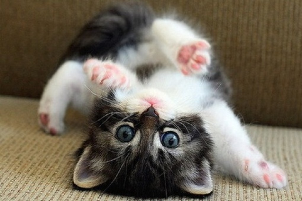 78+ images about victoria's cute cat pics! on Pinterest | Cute
