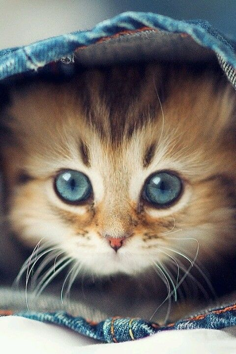 1000+ ideas about Cute Cats on Pinterest | Kittens, Adorable