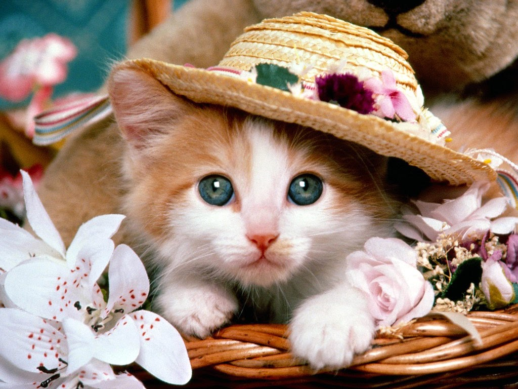 Cute Cat Wallpapers - Trawel India Mails