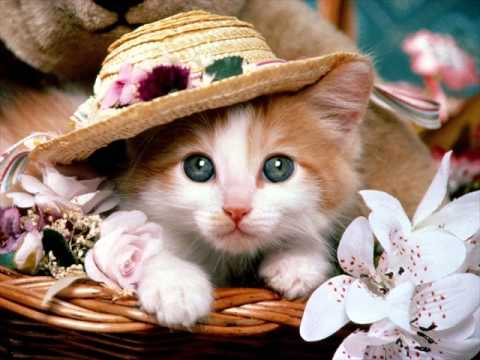 cute cat wallpaper - YouTube