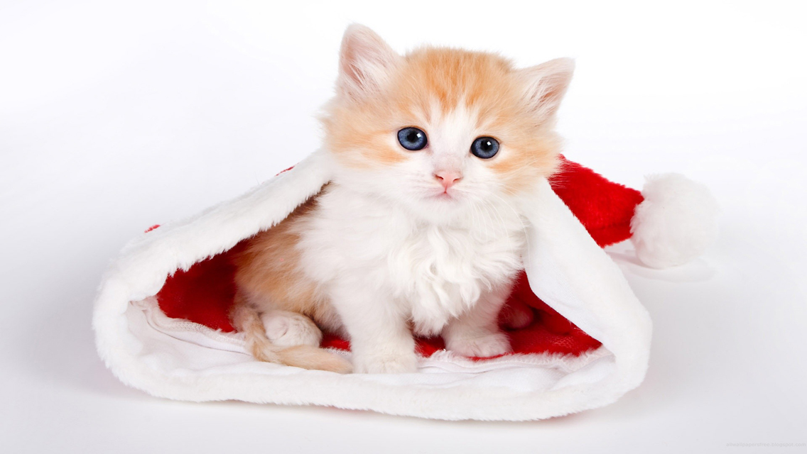 Cute Christmas Wallpapers Free - WallpaperSafari