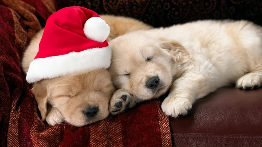 Cute Christmas Puppies - Wallpaper - Free Christmas Wallpapers