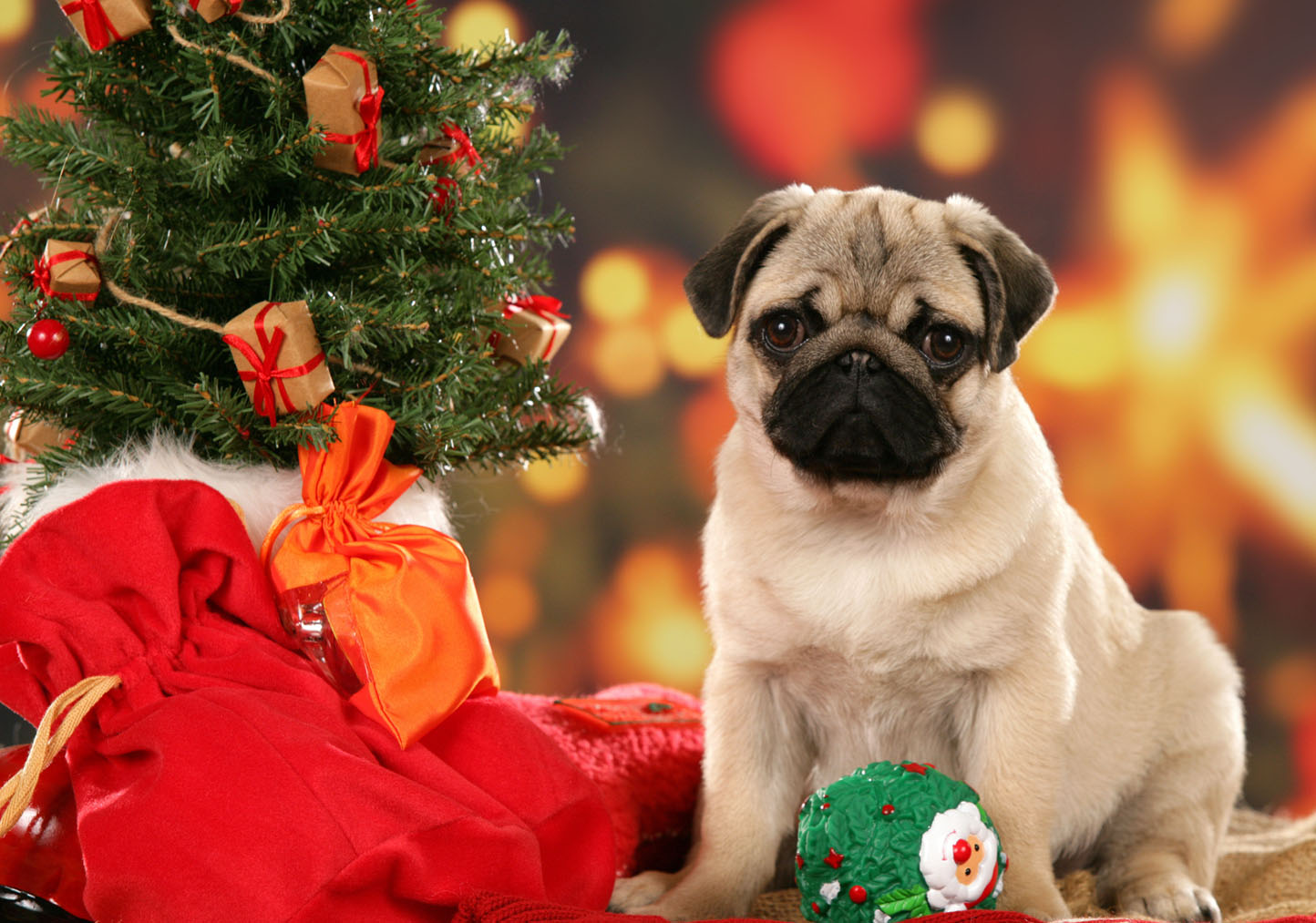 Cute Christmas Dog Wallpapers - HD Wallpapers Pop