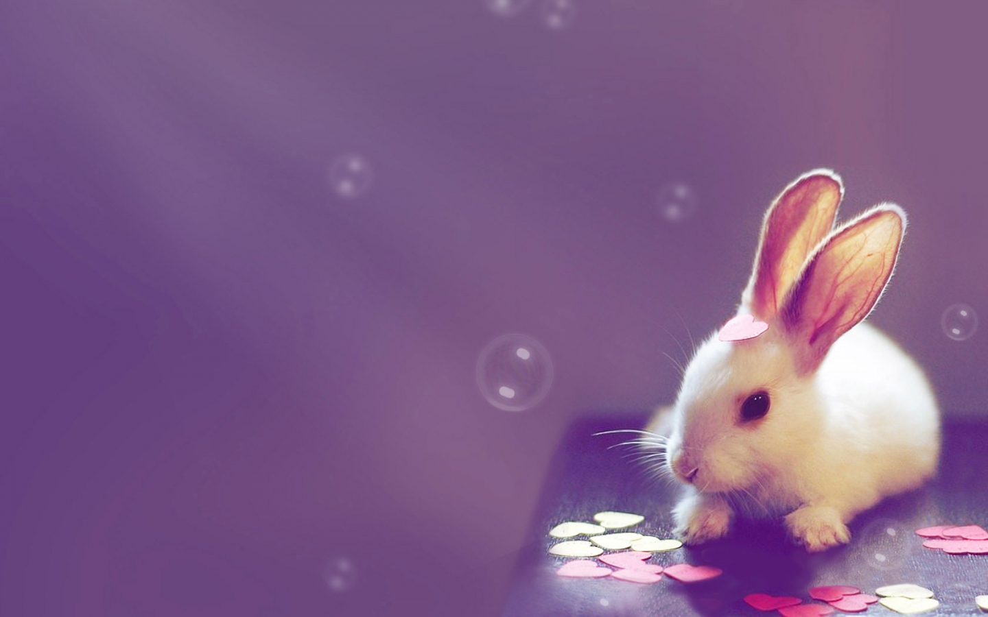 Cute Computer Wallpapers