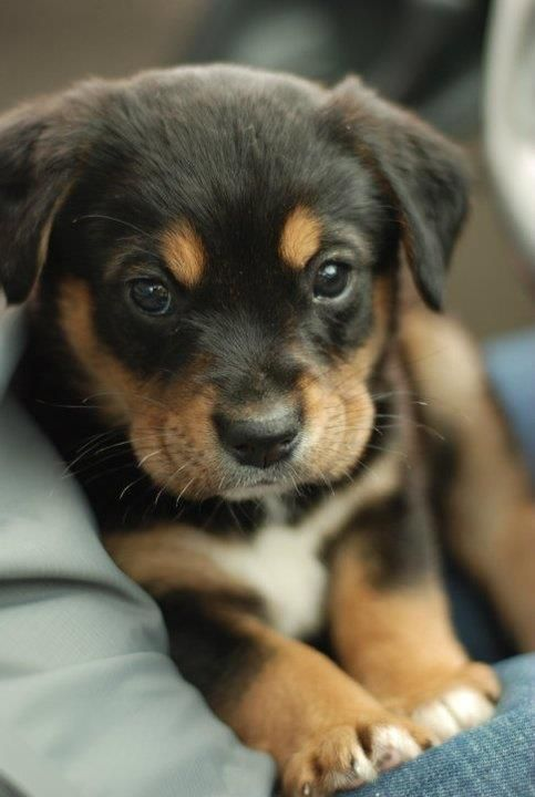 1000+ ideas about Cutest Dogs on Pinterest | Cute small dogs