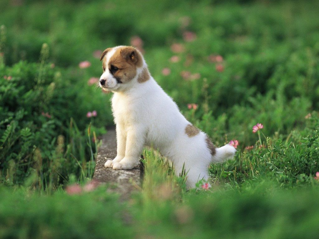Cute Puppies Wallpapers HD - Wallpaper Cave