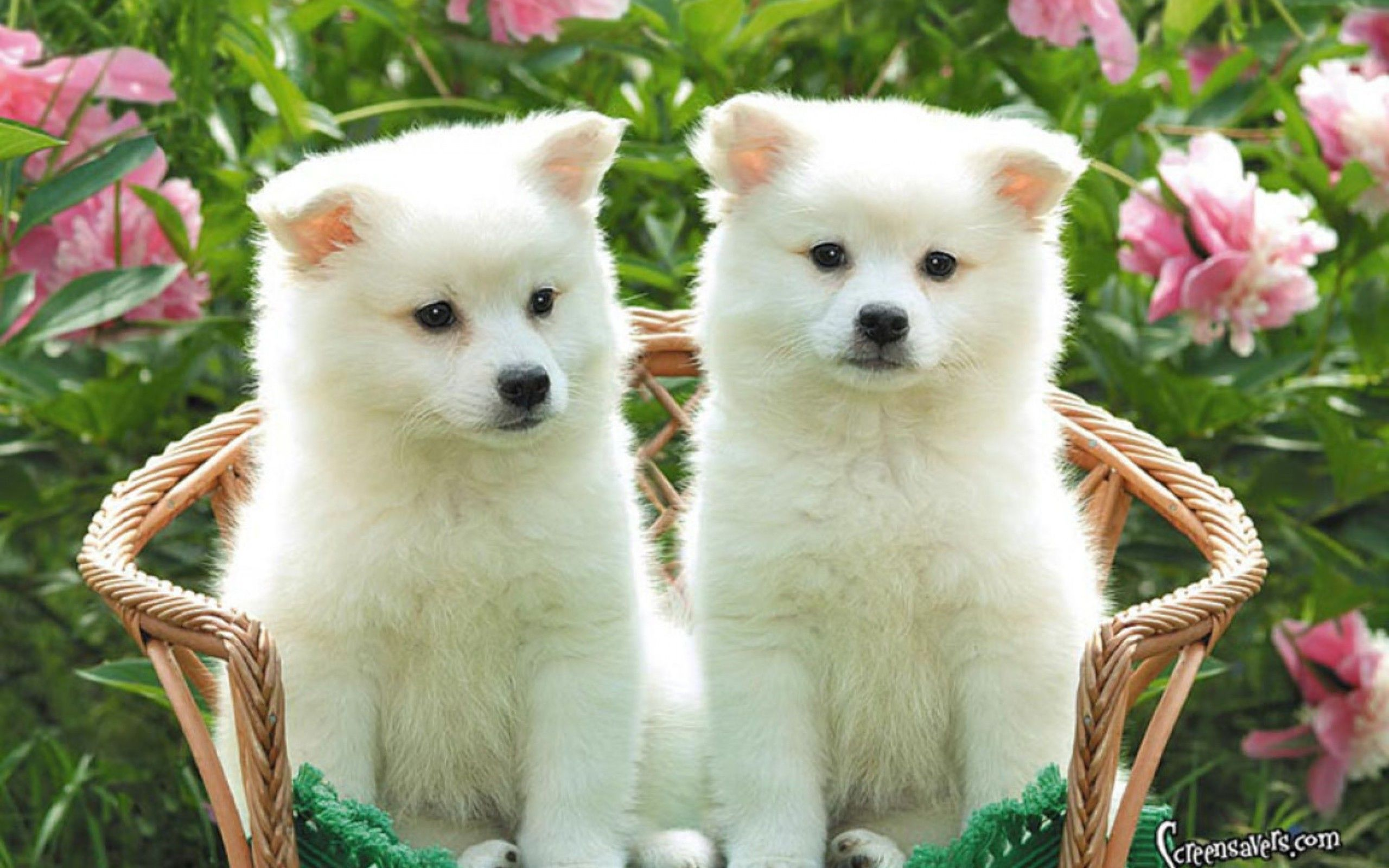 Cute Puppy Wallpapers Group (79+)