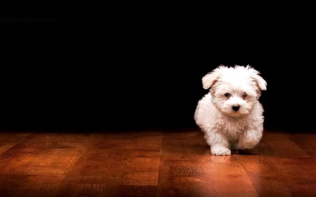 Cute Dogs Wallpapers Hd Sf Wallpaper
