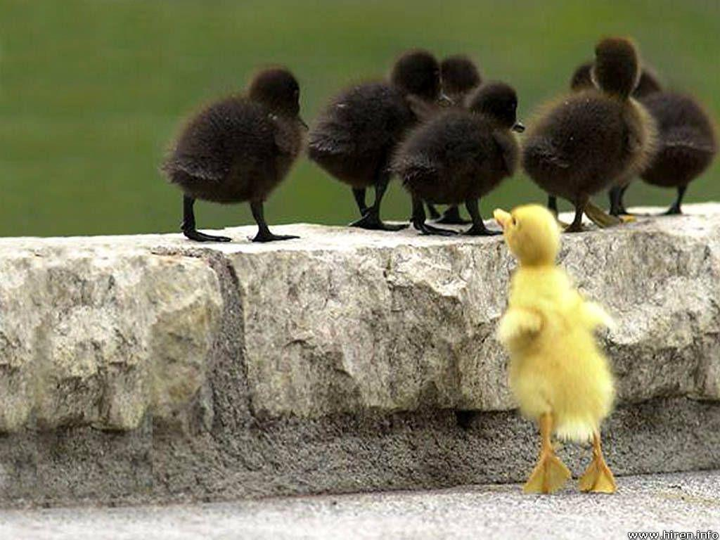 78+ images about yellow duckie on Pinterest | Its always, iPhone