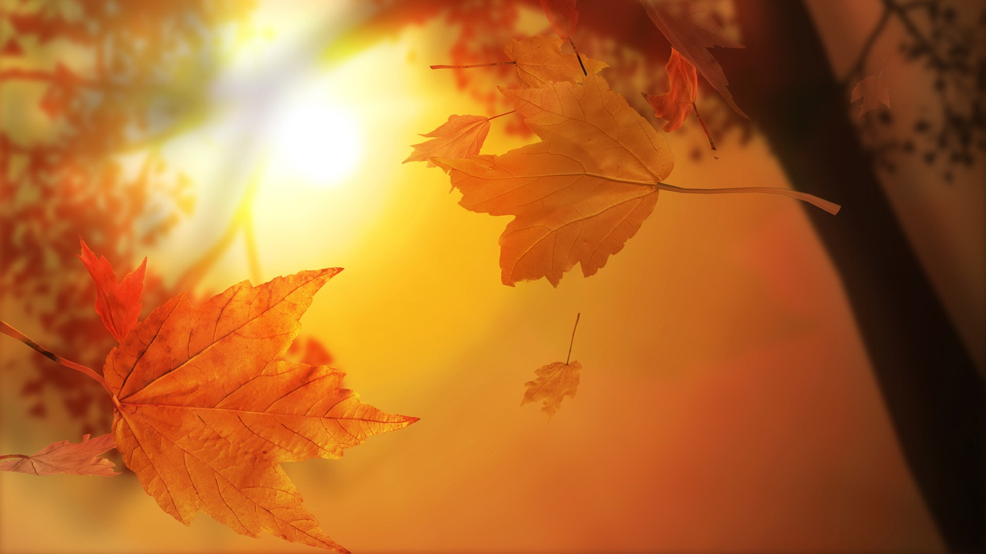Nature Wallpaper: Cute Fall Wallpaper 1080p for Wallpaper