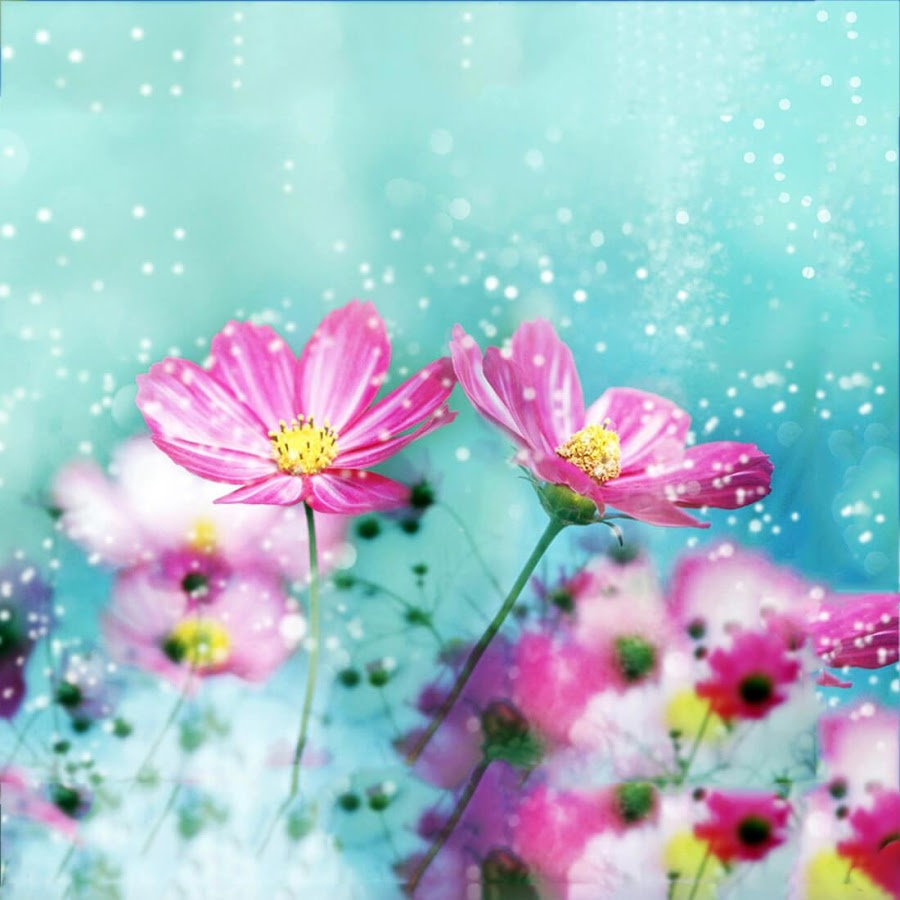 Cute Flowers Live Wallpaper