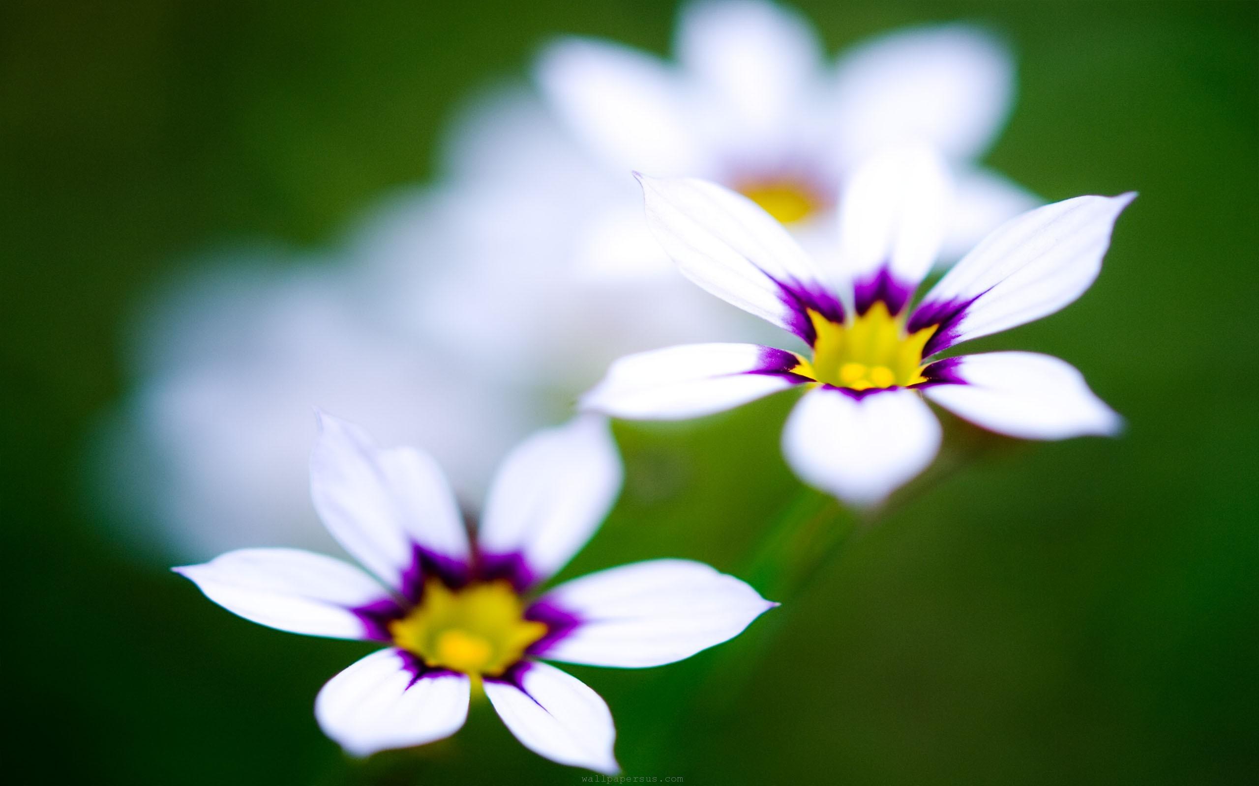 Cute Flowers Images Sf Wallpaper