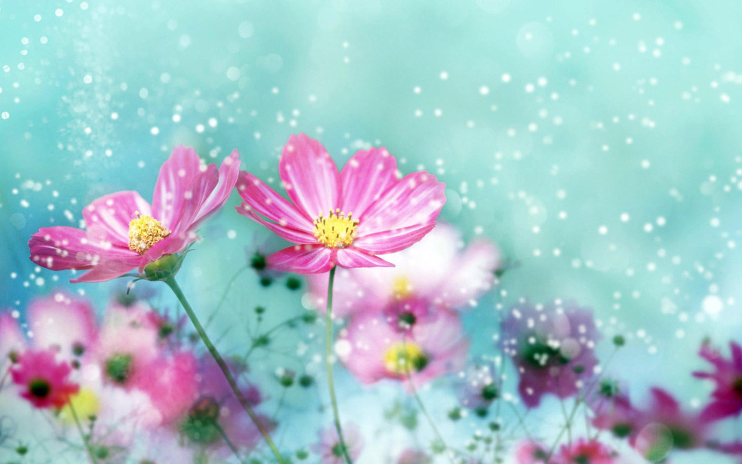 1000+ ideas about Cute Flower Wallpapers on Pinterest