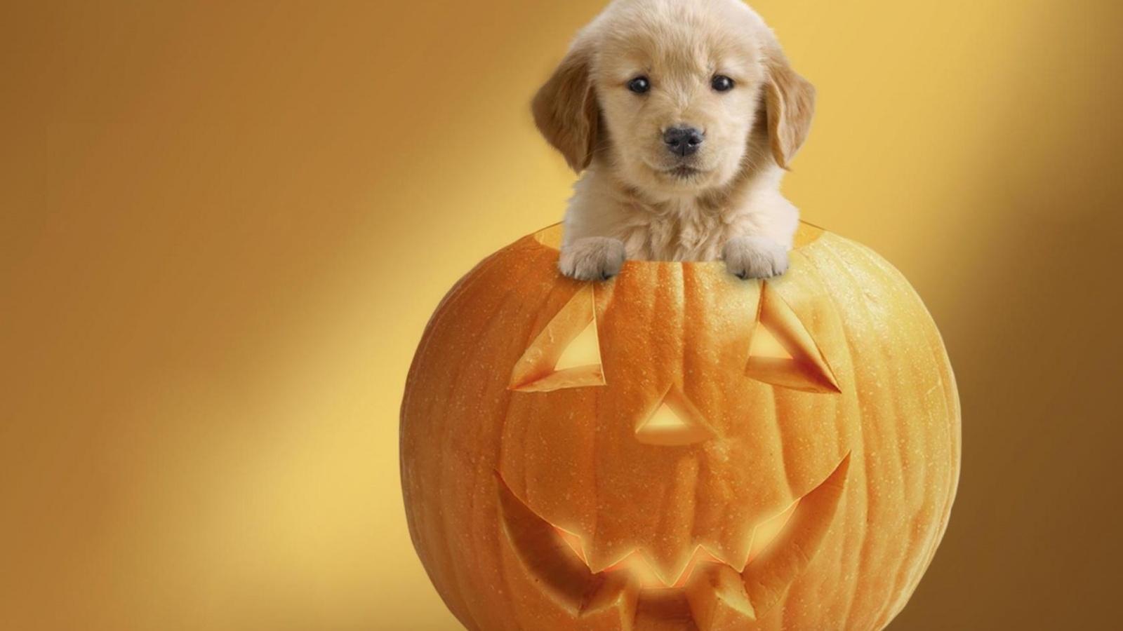 18 Cute Halloween Desktop Wallpapers | WPPSource