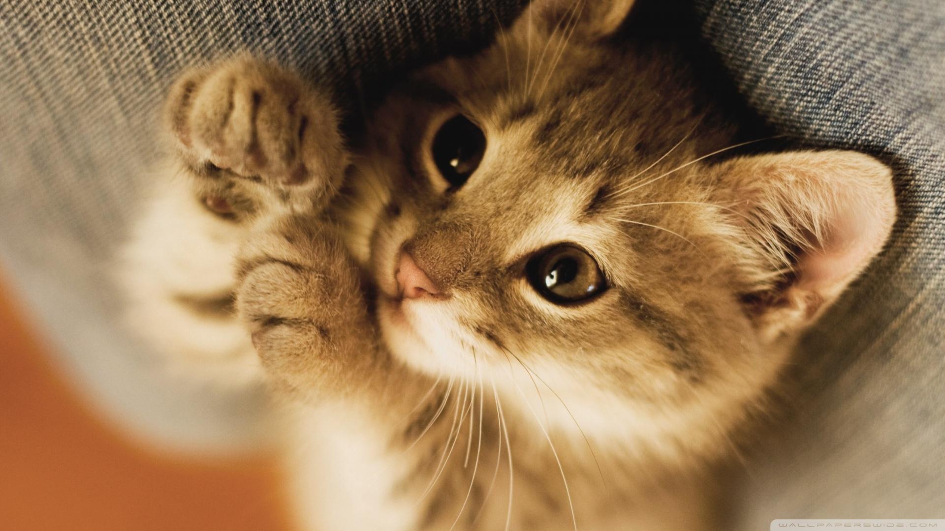 Cute kitten backgrounds sf wallpaper cute kitten backgrounds page 1 thecheapjerseys Images