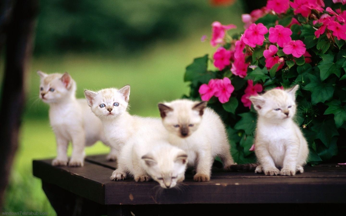 Cute kitten backgrounds wallpaper sf wallpaper free cute kitten wallpapers wallpaper cave altavistaventures Choice Image
