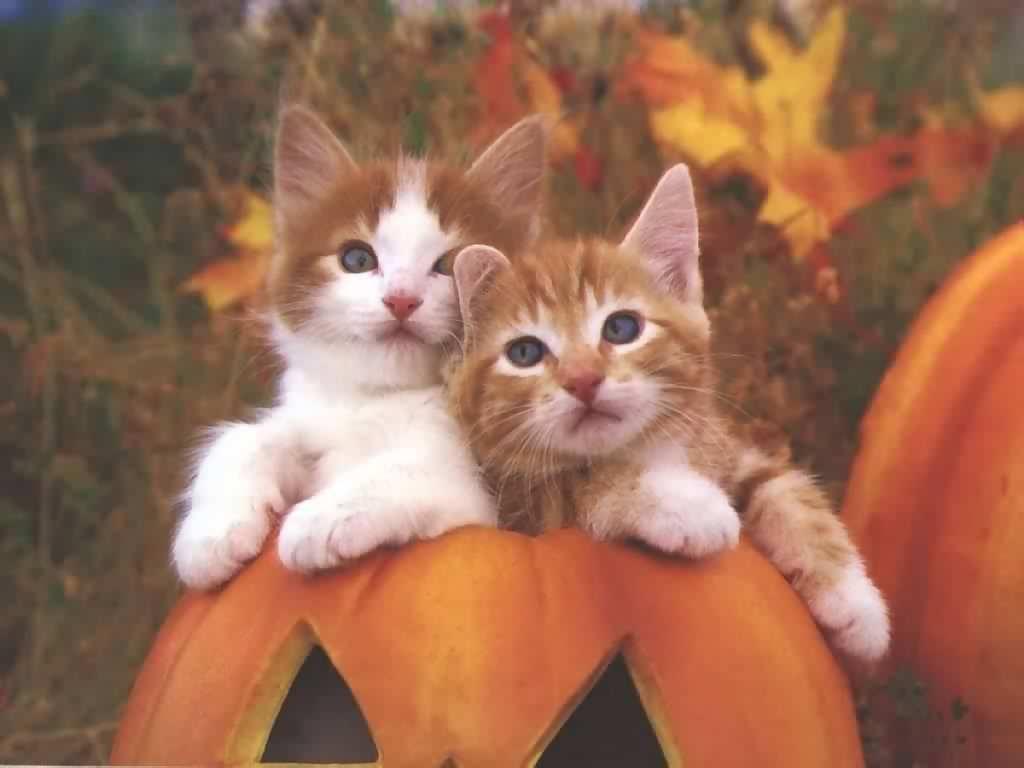 cute kitty wallpaper cats - sf wallpaper