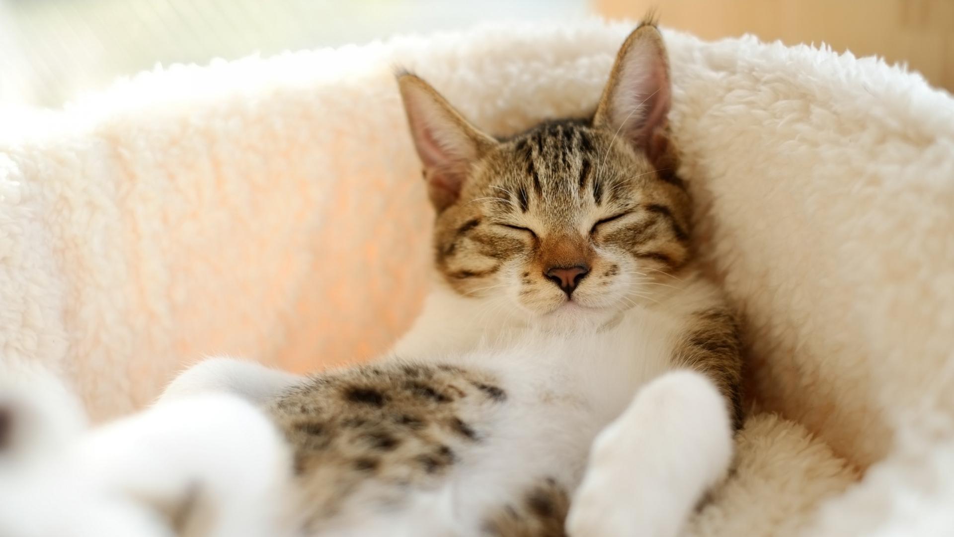 Cute Kitty Wallpaper Cats Sf Wallpaper