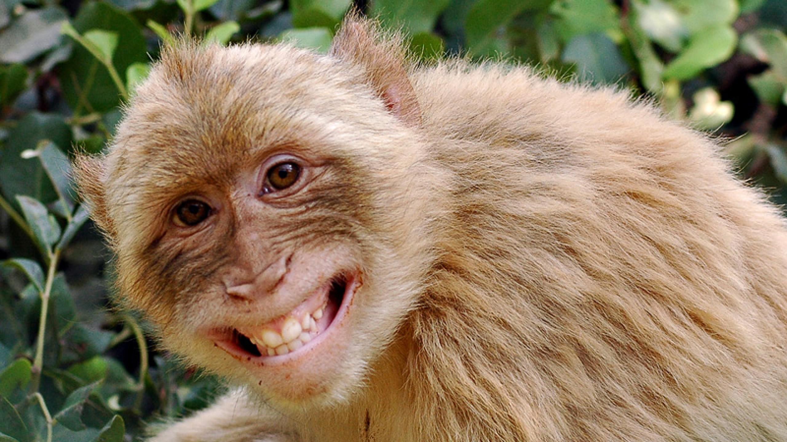 Cute Monkeys Wallpaper Page 1
