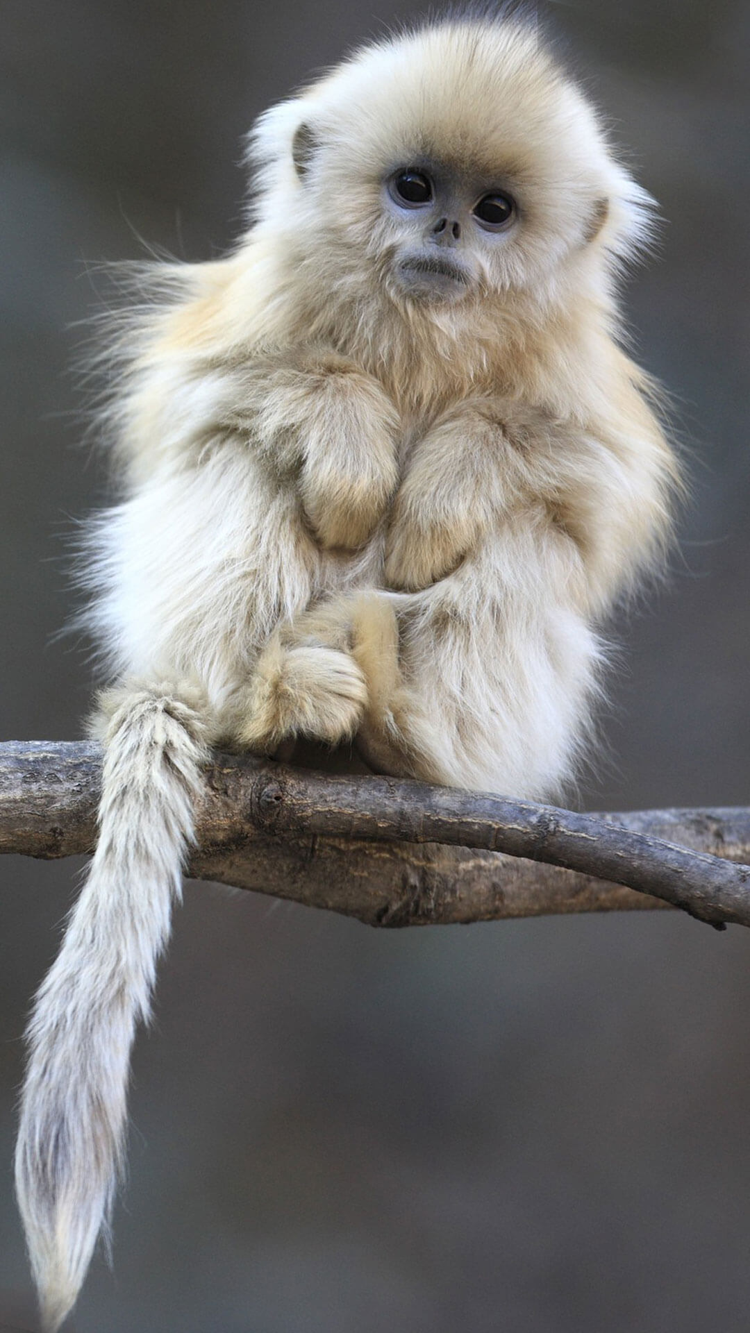Cute Monkey Wallpaper For iPhone 6 HD | Animal Wallpaper for