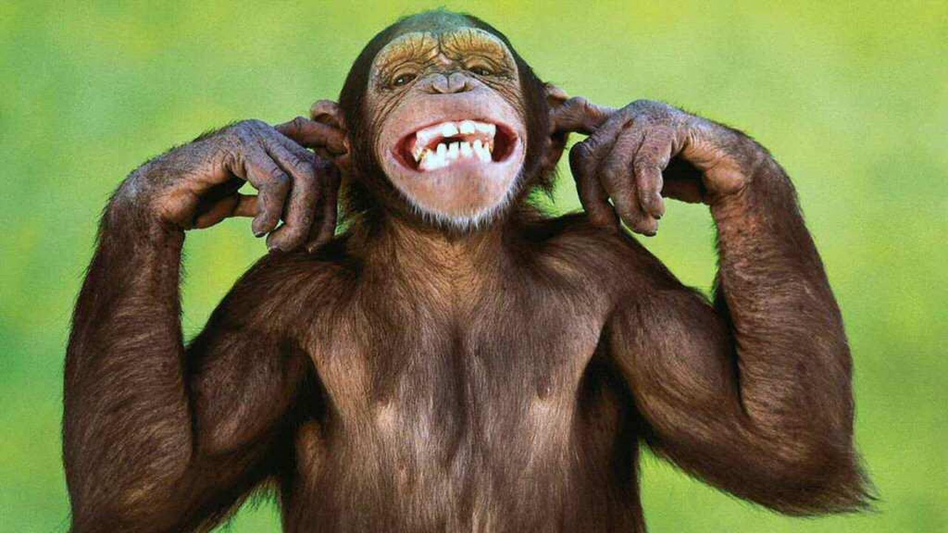 Cute Monkeys Wallpaper - wallpaper