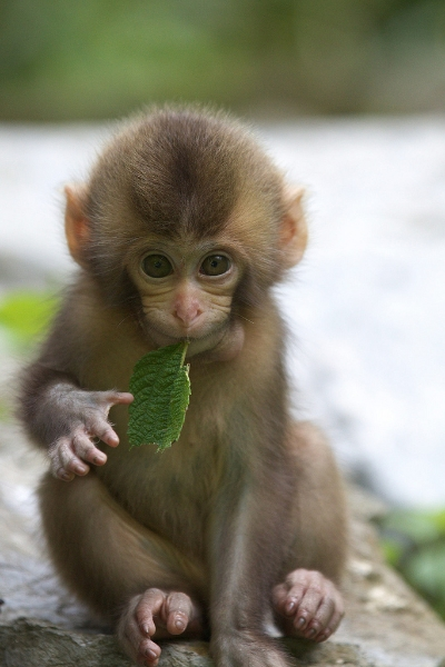 Collection of Cute Monkeys Wallpaper on HDWallpapers