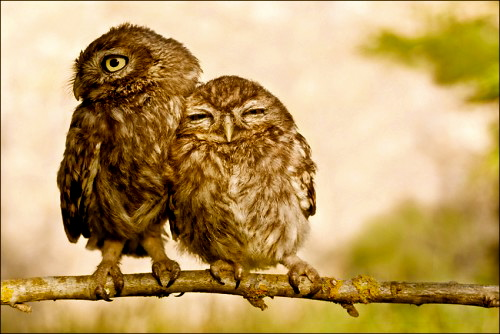 44 units of Cute Owl Pictures