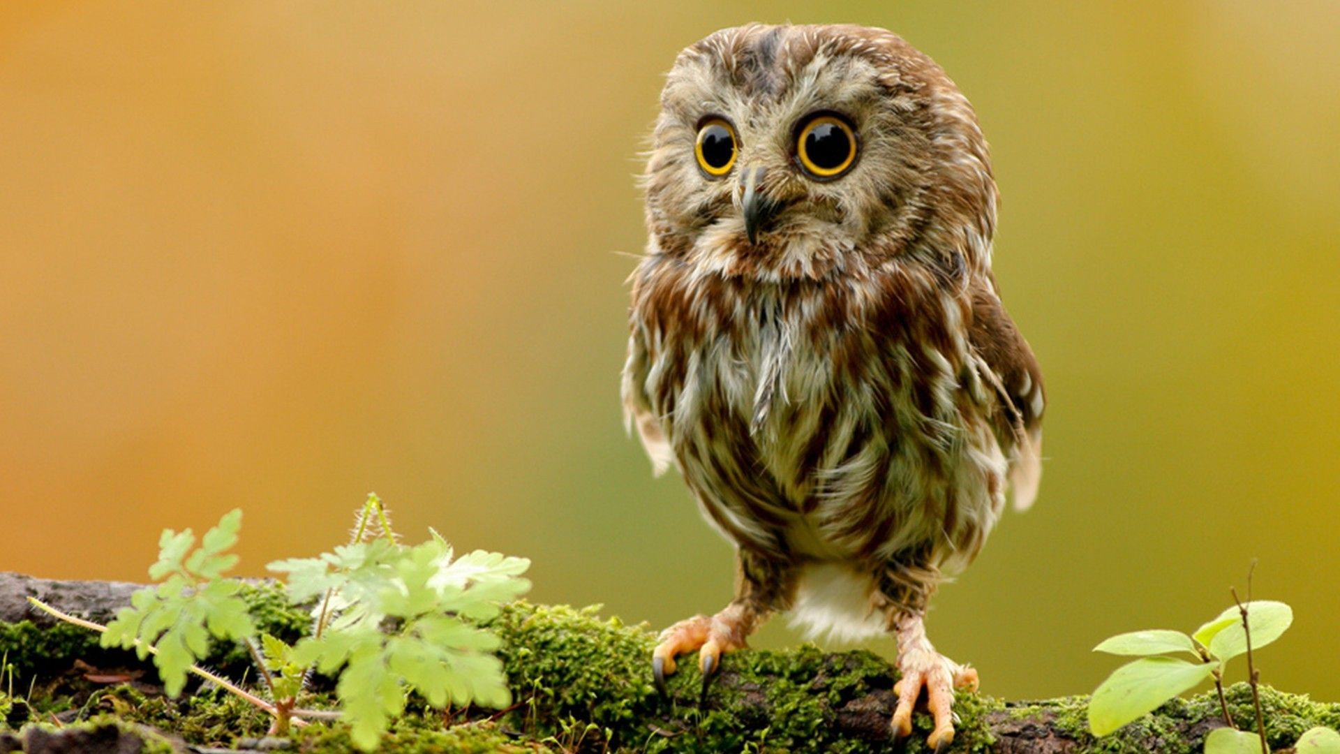 Cute Owl Wallpapers - Wallpaper Cave