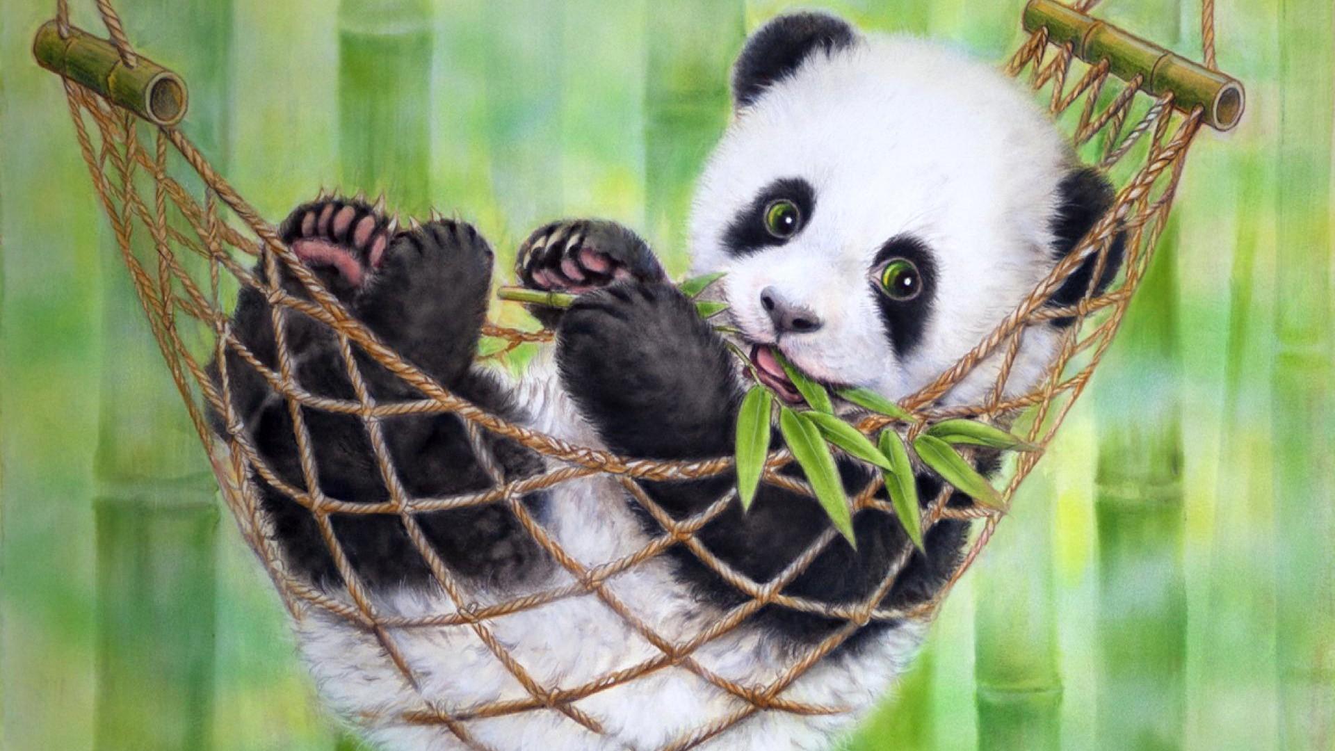 Cute Panda Pictures Sf Wallpaper