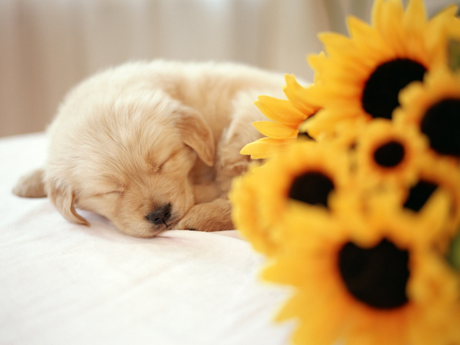 Ideas About Cute Puppy Puppies Backgrounds On Download Wallpapers