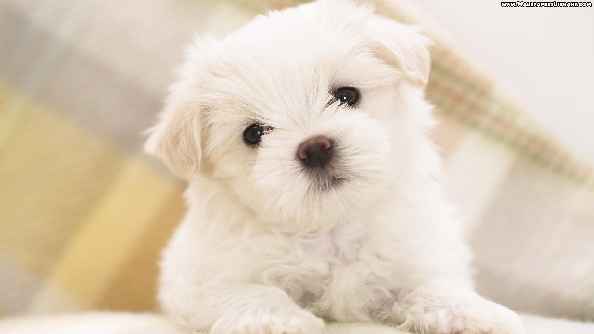 1000+ ideas about Cute Puppy Wallpaper on Pinterest | Very cute