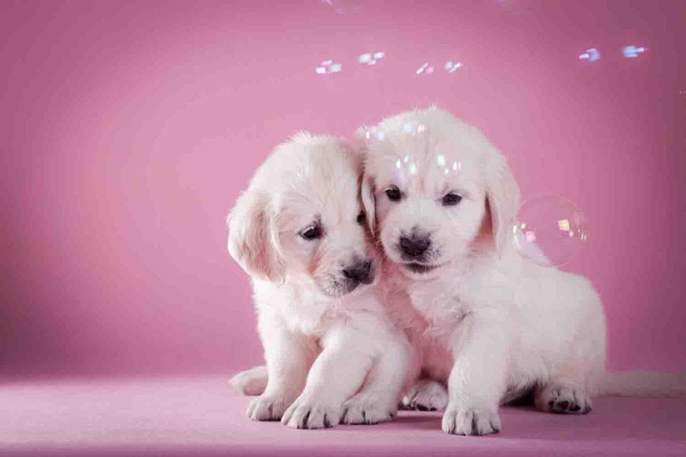 Cute Puppy Backgrounds – Android Apps on Google Play