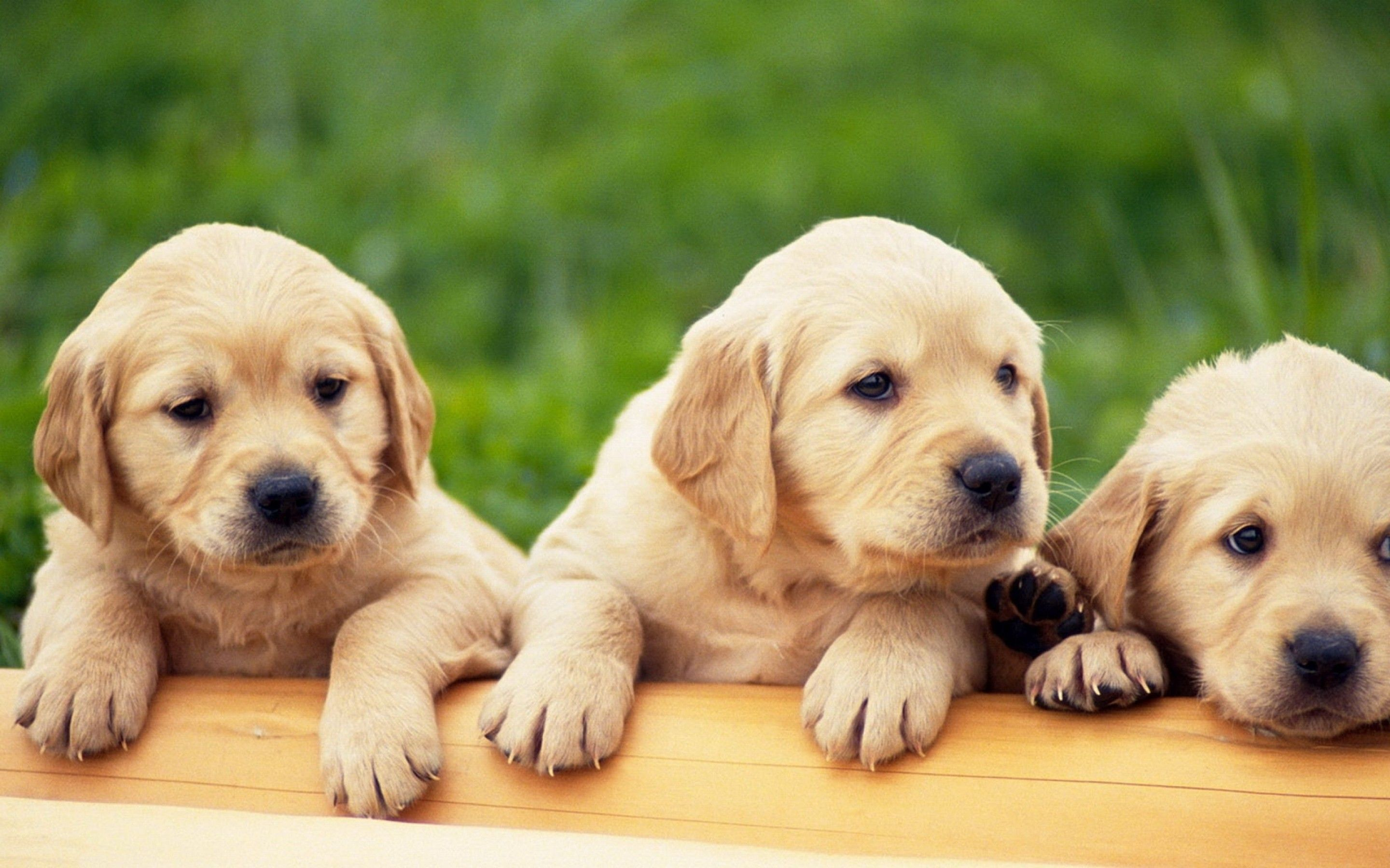 About Pets Animals Cute Puppys Backgrounds With Puppies For