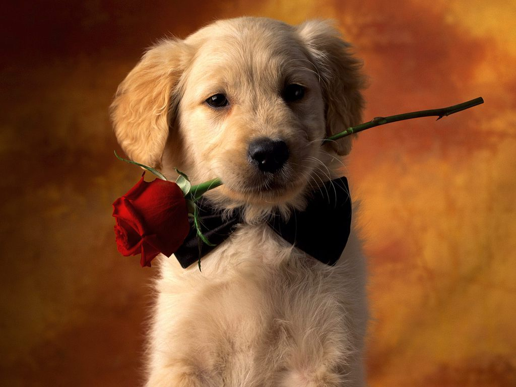 Cute Puppies For Wallpaper Backgrounds On Pictures Of High
