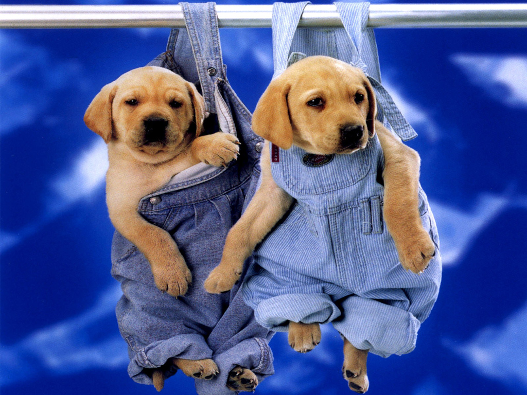 Puppy Pictures Cute Puppies Beautiful Wallpapers Backgrounds With