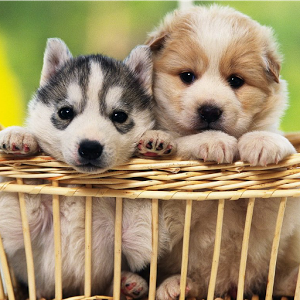 Cute Puppy Wallpapers HD - Android Apps on Google Play