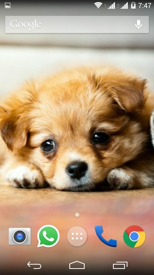 Cute Little Puppies Wallpapers - Android Apps on Google Play