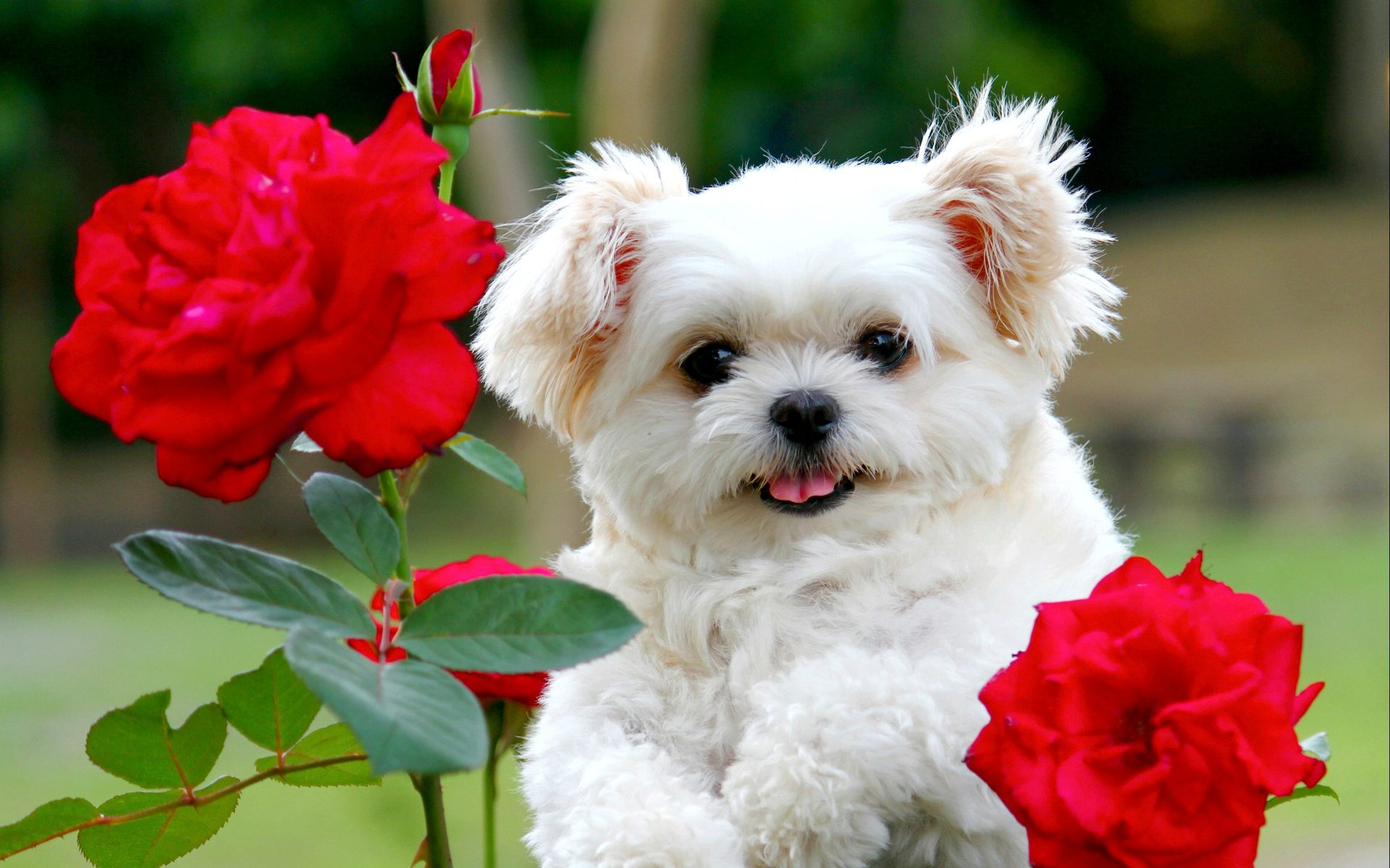 78+ ideas about Cute Puppy Wallpaper on Pinterest | Cute puppies