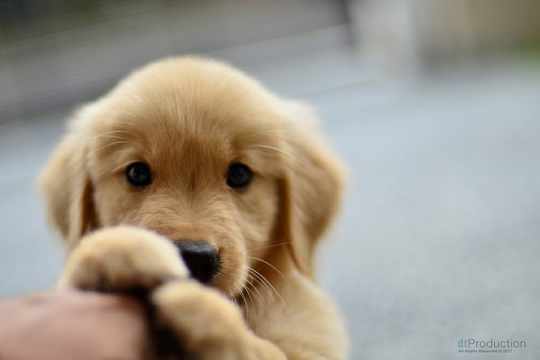 Collection of Cute Puppy Pics on HDWallpapers